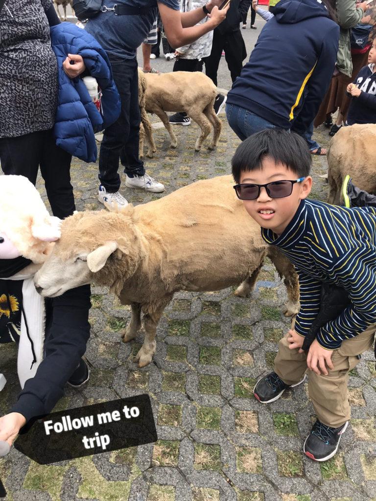 清境農場奔羊節