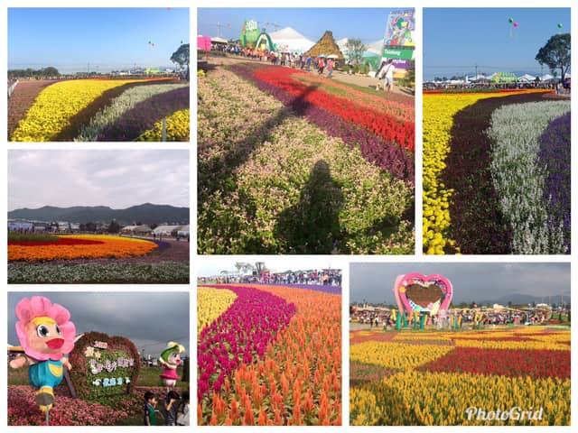 2019新社花海,2019台中國際花毯節,逢甲夜市