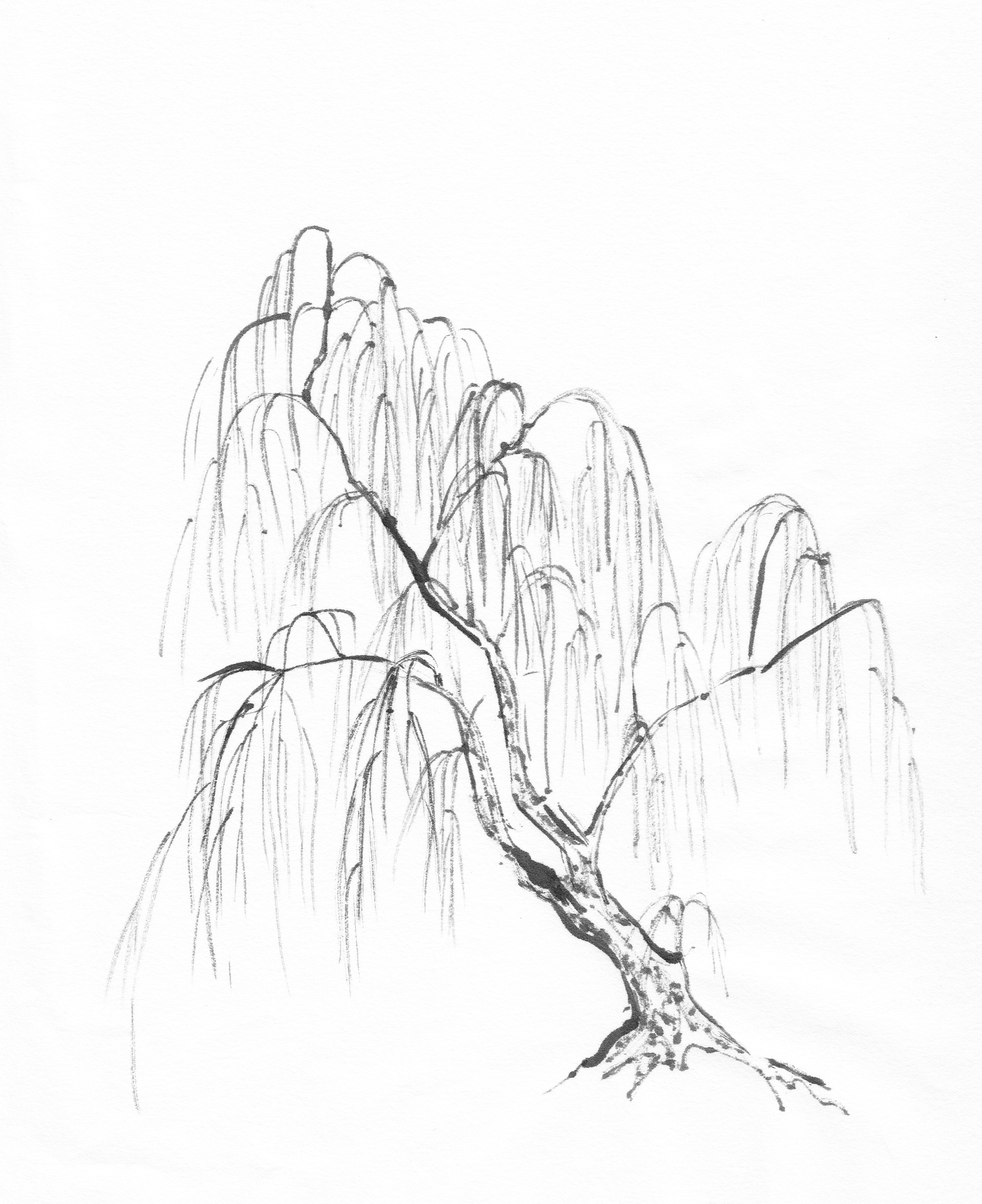 Images About Trees