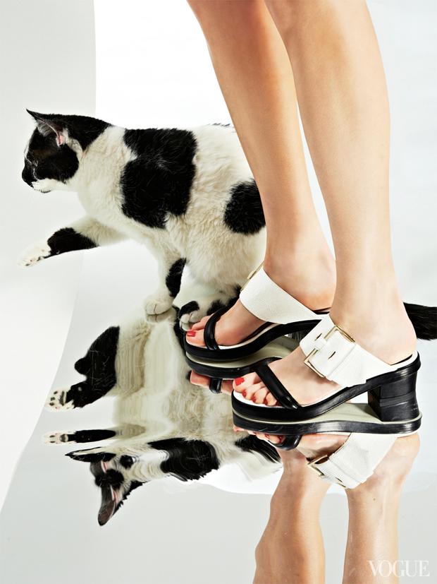 gatinhos-e-sapatos-vogue-05