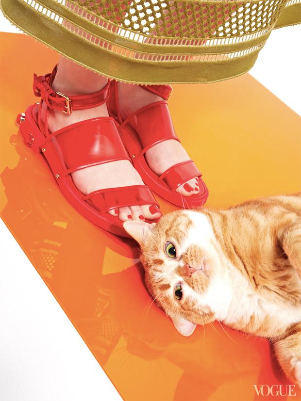 gatinhos-e-sapatos-vogue-07