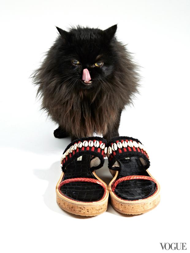 gatinhos-e-sapatos-vogue-08