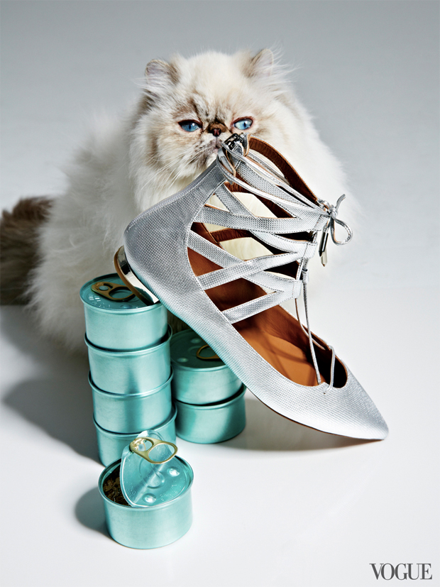 gatinhos-e-sapatos-vogue-14