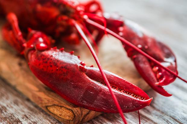 Vermelho cores lagosta shutterstock_222171277