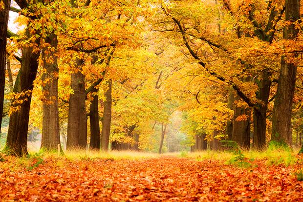 Laranja cores curiosidades Outono