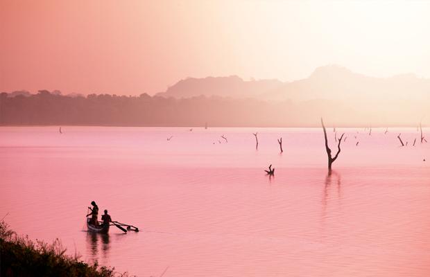 curiosidades cor rosa lago