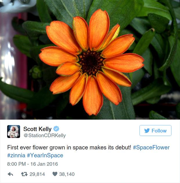 primeira flor cultivada no espaço NASA