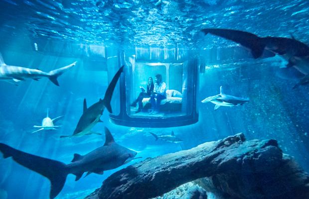 follow-the-colours-airbnb-quarto-embaixo-dagua-aquario-tubaroes-01