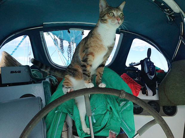 follow-the-colours-gato-barco-viagem-Liz Clark-05