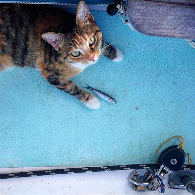 follow-the-colours-gato-barco-viagem-Liz Clark-12