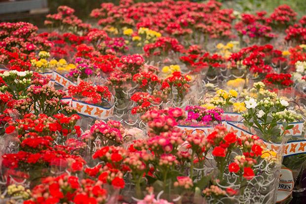 follow-the-colours-holambra-9
