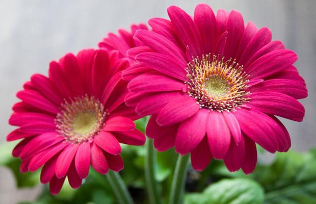 follow-the-colours-plantas-purificam-ar-nasa-02