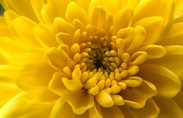 follow-the-colours-plantas-purificam-ar-nasa-05