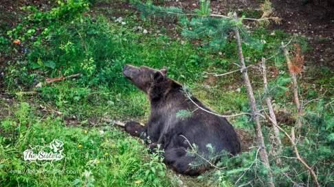 Baloo the bear