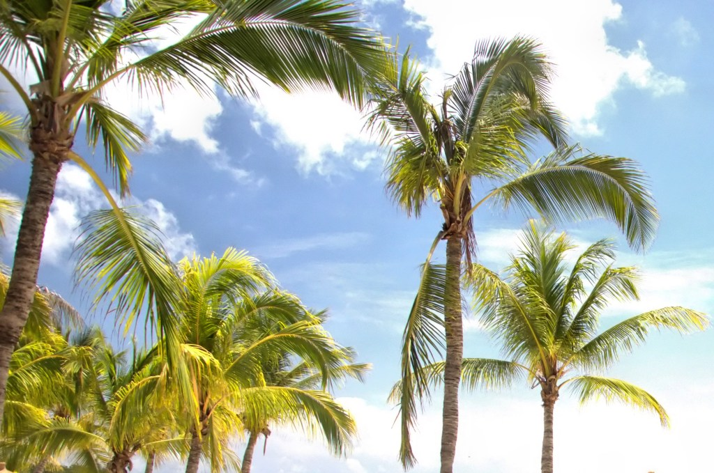 best things to do in Aruba - palm trees