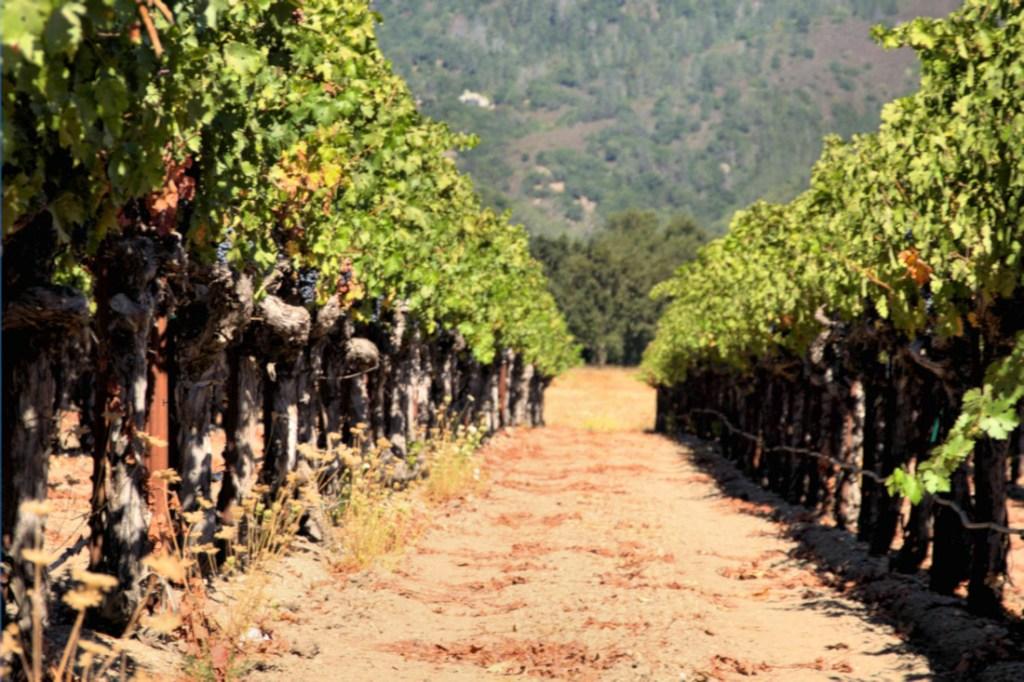 Dolina Napa Valley - winorośle