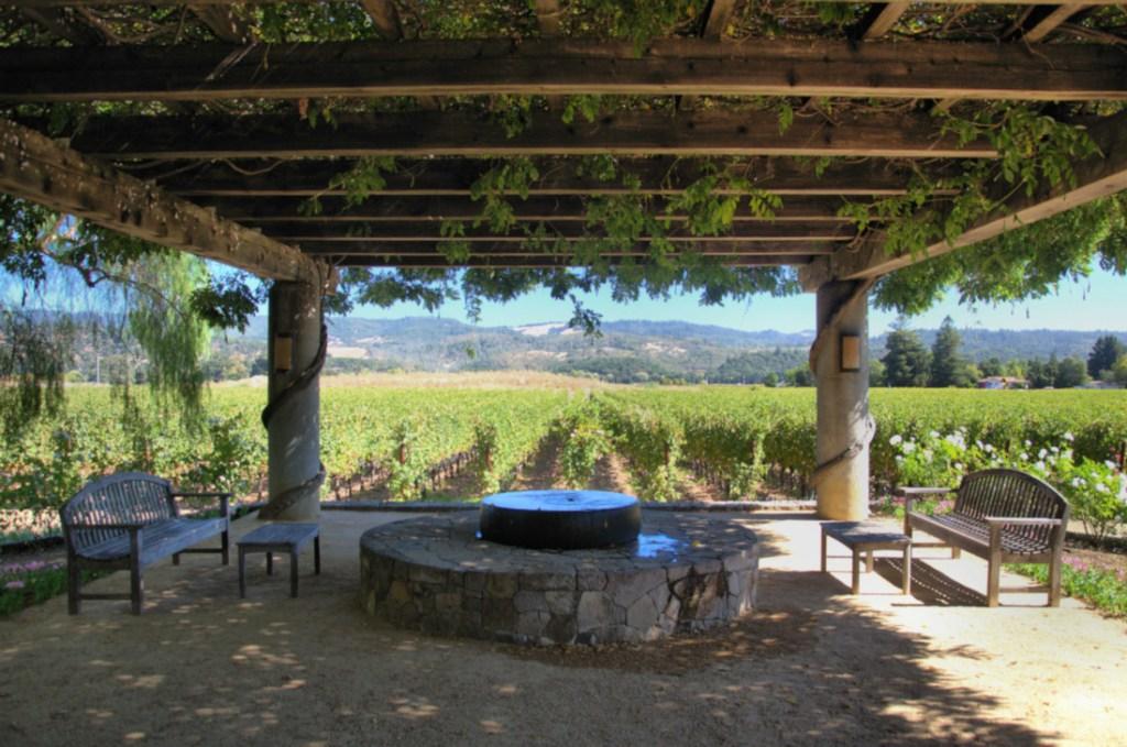 Pękny widok na winogrona na tyłach winnicy Heitz