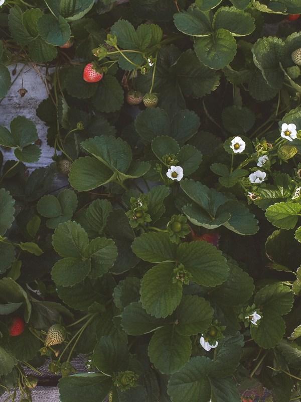 Why Farm Fresh Is So Important