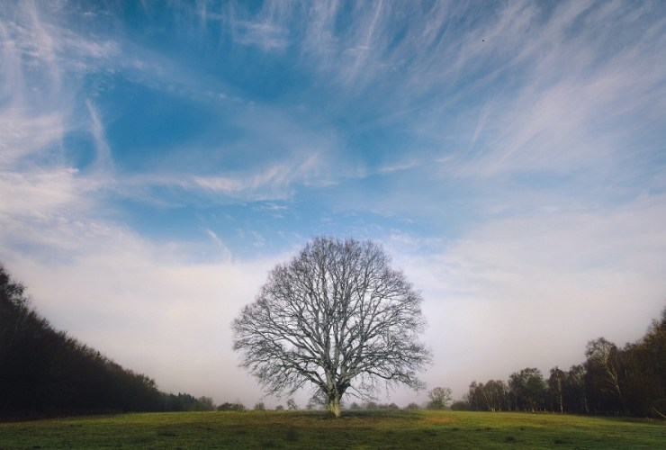 Even a Single Tree Can Help Cool Down a City