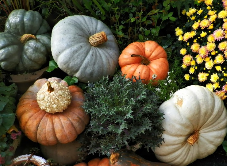 Stunning Heirloom Pumpkin Display with autumn kale