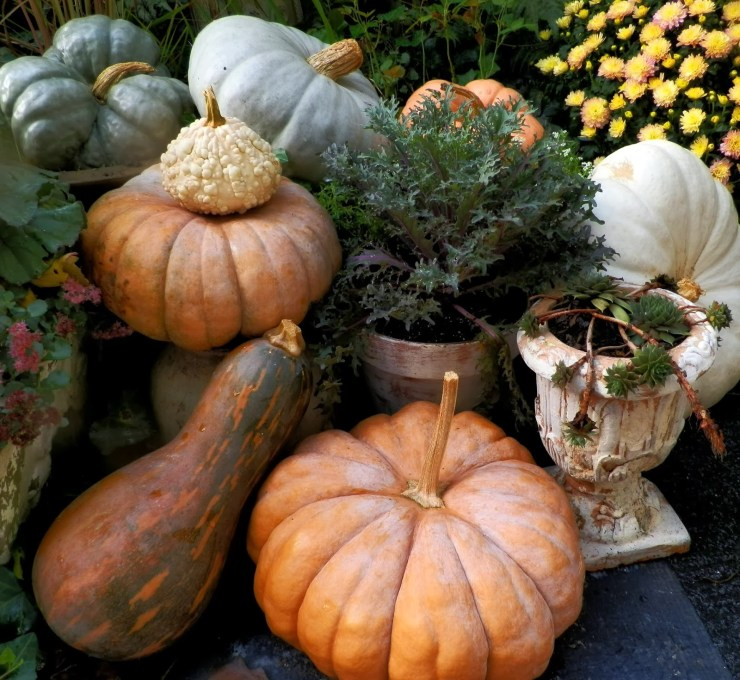 Beautiful Fall Display with Heirloom pumpkins and autumn kale shabby chic