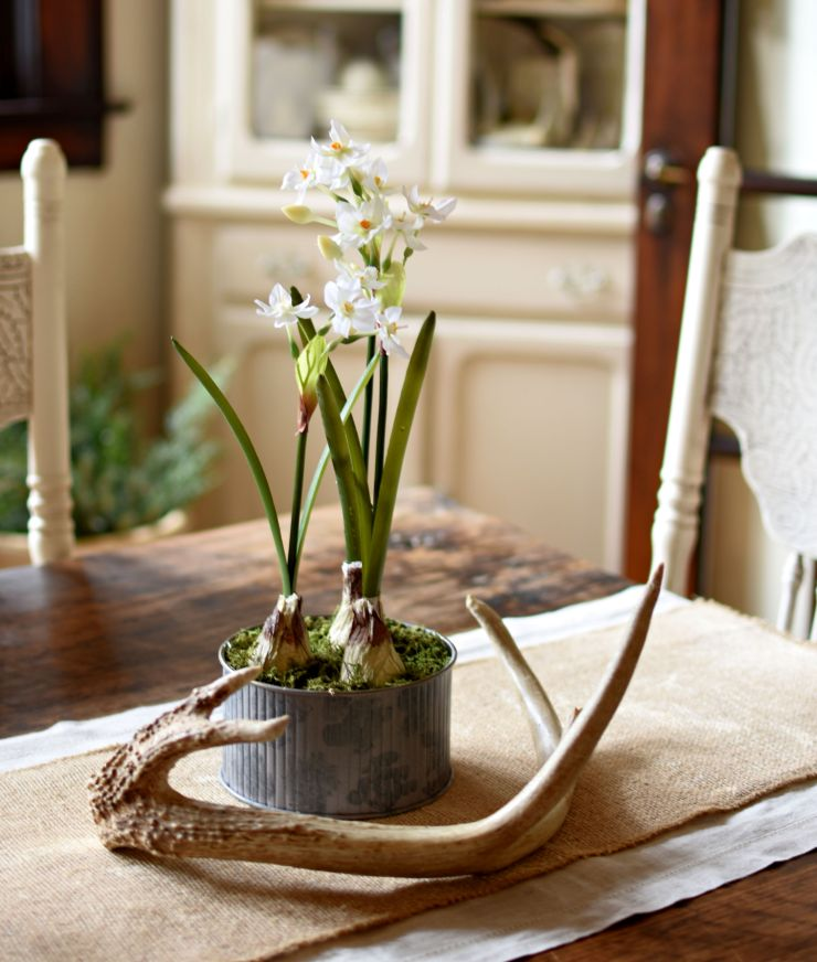 winter decor paperwhites, antlers, natural textures