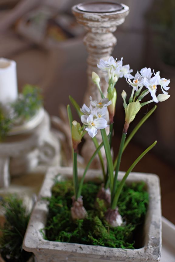 Beautiful Faux paperwhites Pottery Barn