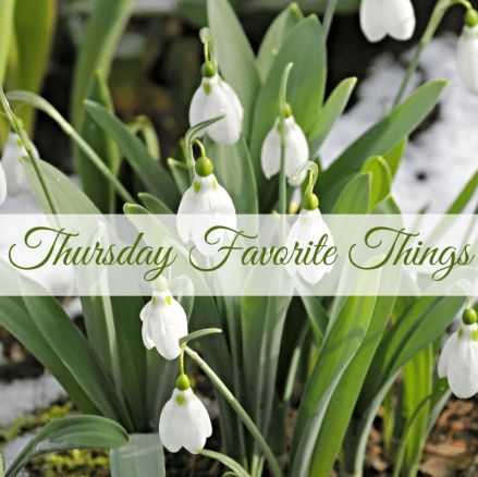 Paperwhites Beautiful winter to spring decorating ideas