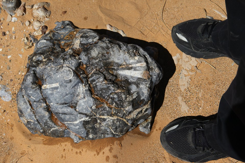 201505_MoroccoFossilHunting-0417