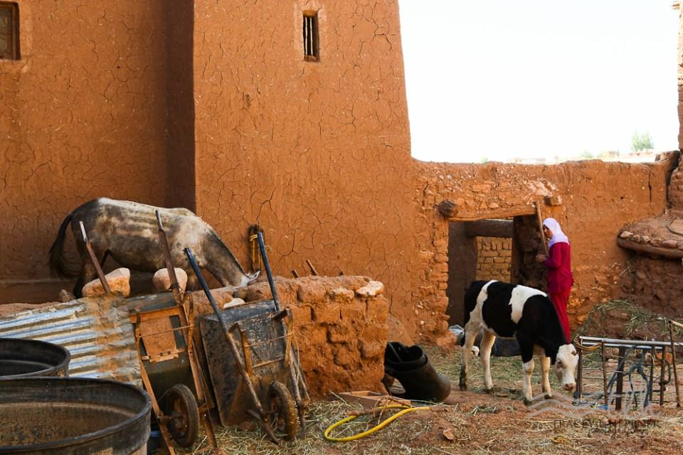 201505_Morocco_3-0048