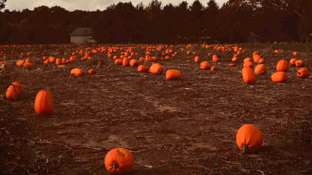 series películas Halloween