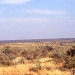 African.landscape