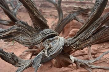 Magnificent twisting trees