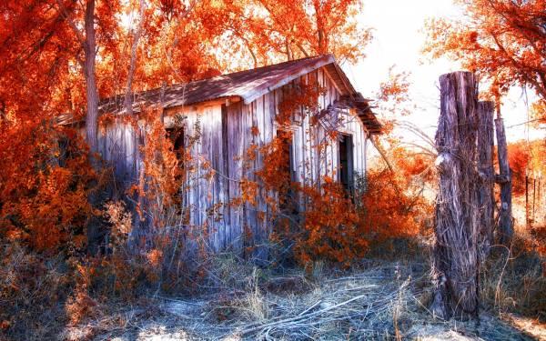 Обои заброшенный дом осень деревья листва на рабочий стол