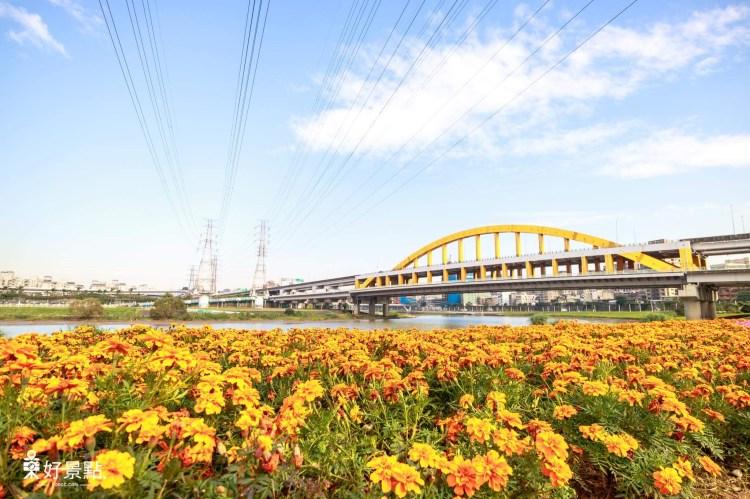 台北松山景點「觀山河濱公園」14萬盆花朵營造花海美景