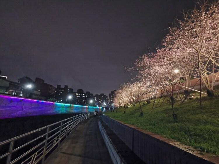 |台北。內湖|2020樂活公園夜櫻季-超浪漫寒櫻盛開/捷運東湖站附近