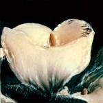 Edenflowers