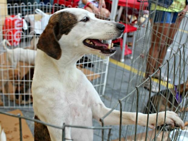 Cerca de 30 animais estarão disponíveis para um novo lar neste sábado. Foto: Reprodução/ Internet