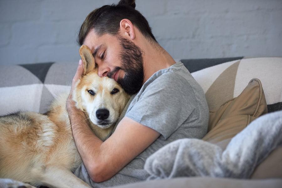 animais de estimação faz bem à saúde
