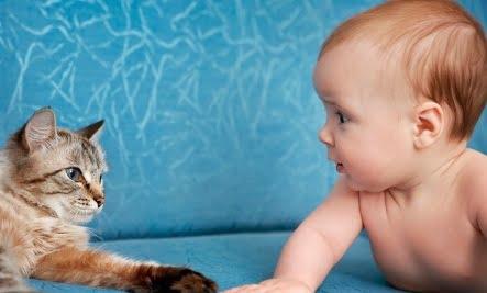 CRIANÇA ANIMAL ESTIMAÇÃO FAZ BEM SAÚDE - Você Sabia que Ter Animais de Estimação Faz Bem à Saúde?