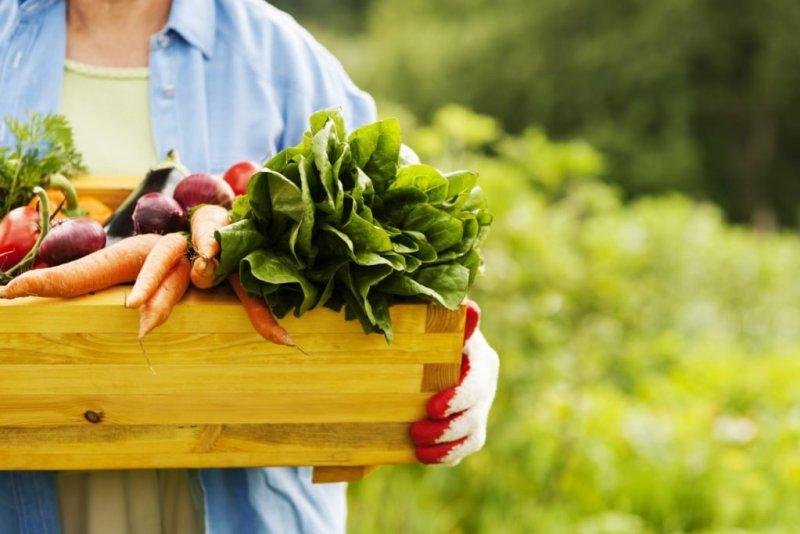 alimentos orgânicos 2 1024x683 - Diferenças entre os alimentos orgânicos e os comuns