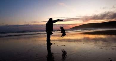 animais de estimação faz bem a saúde - Você Sabia que Ter Animais de Estimação Faz Bem à Saúde?