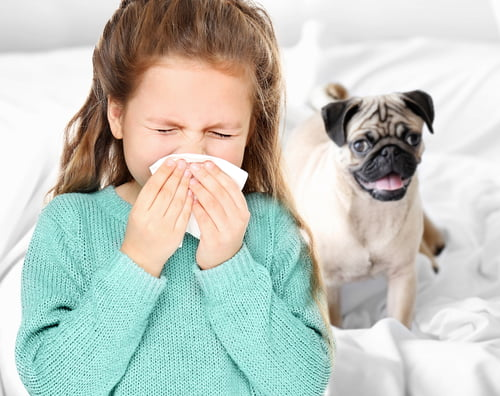 1 13 - Alergia a animais de estimação: como saber se sou alérgico?