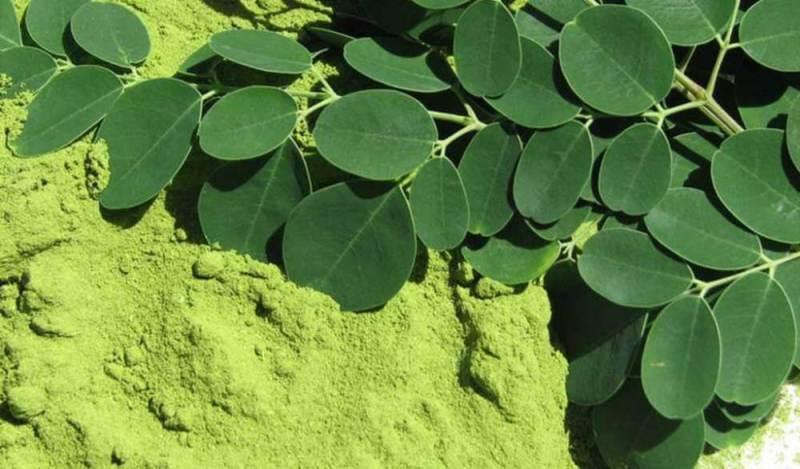 moringa caps po e folhas - Descubra Agora Quais São os Alimentos Mais Ricos em Vitamina A