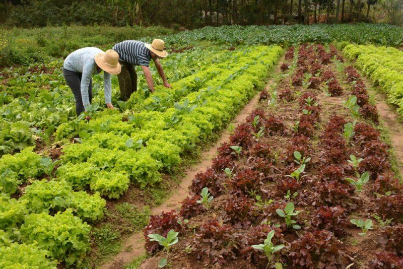 Fonte da Saude Curso Online de Producao de Alimentos Organicos agricultura 1024x683 - Curso Online de Produção de Alimentos Orgânicos