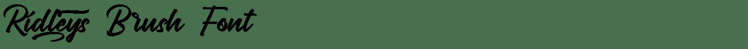 Ridleys Brush Font