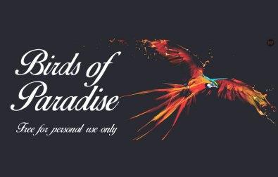 birds-of-paradise