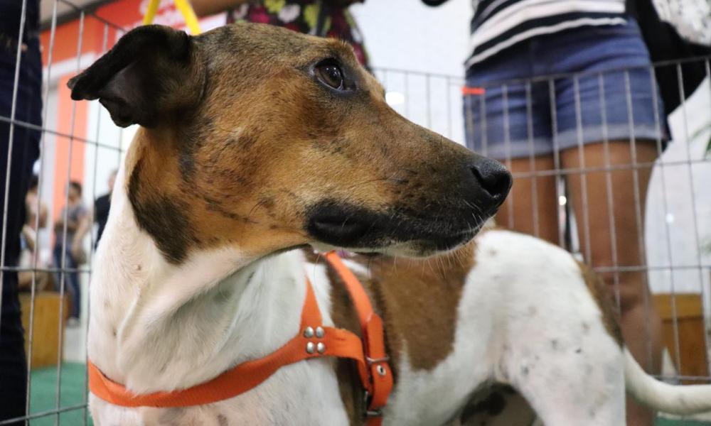 Feira de adoção de animais acontece sábado no Cariri Garden Shopping