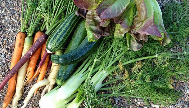 Finding inspiration in the vegetable garden