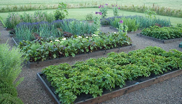 Raised beds in the kitchen garden